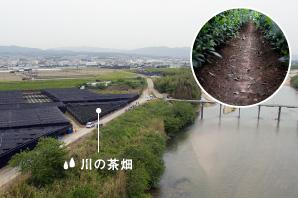 Tea plantation of river