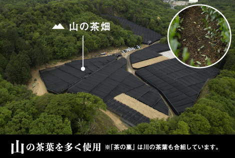 """We use a lot of tea leaves of mountain ※As for """"the CHA no KA"""", tea leaves of river are doing gokumi, too."""